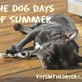 dog days of summer